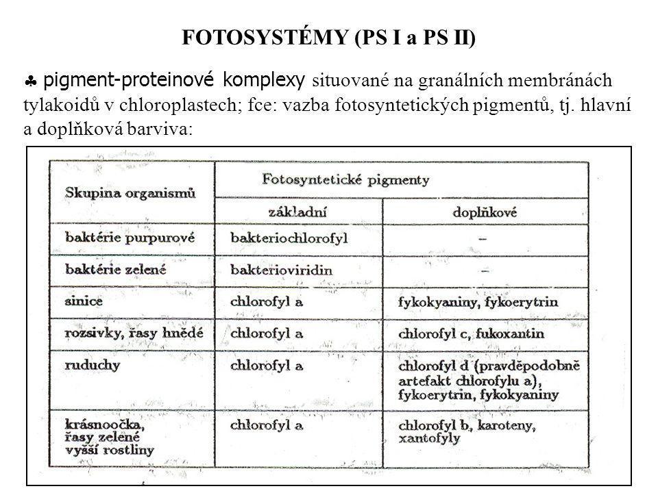 FOTOSYSTÉMY (PS I a PS II)