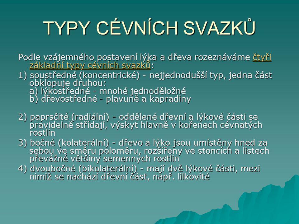 TYPY CÉVNÍCH SVAZKŮ Podle vzájemného postavení lýka a dřeva rozeznáváme čtyři základní typy cévních svazků:
