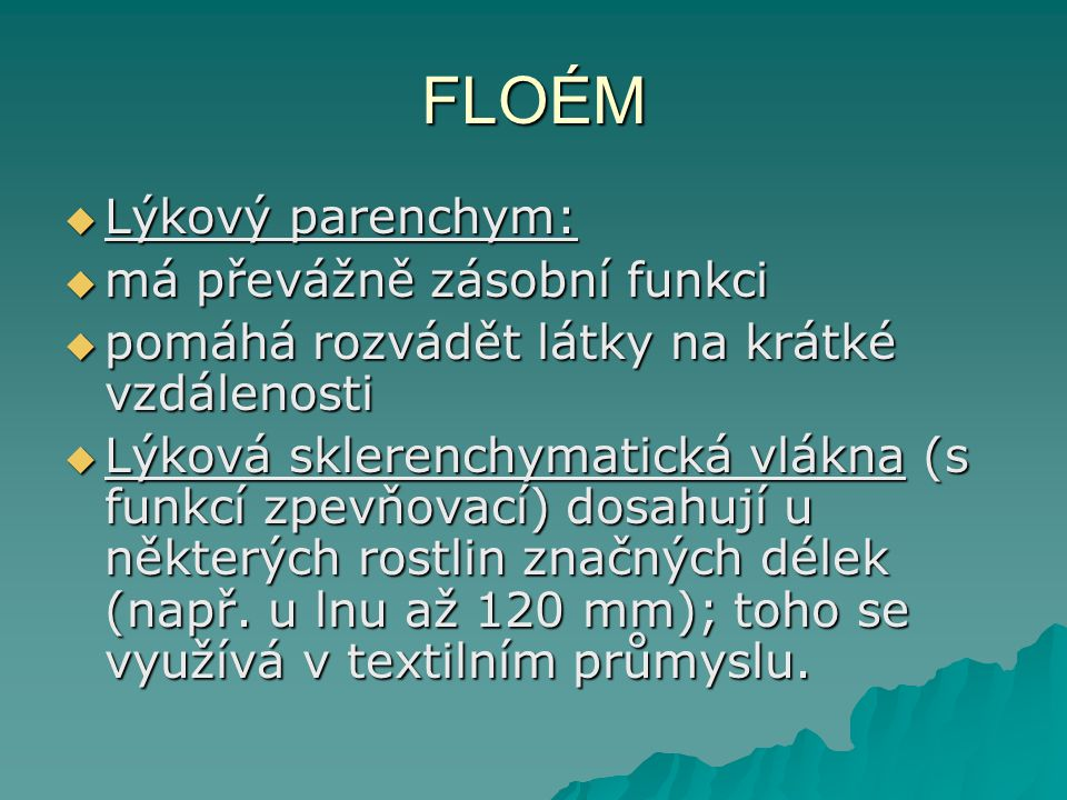 FLOÉM Lýkový parenchym: má převážně zásobní funkci