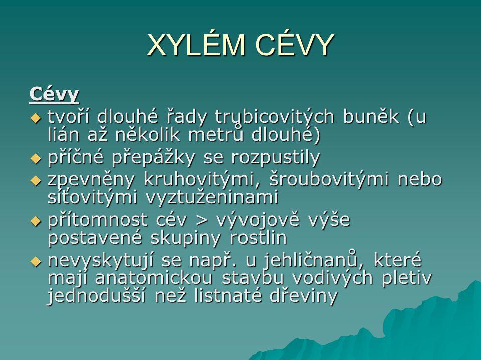 XYLÉM CÉVY Cévy. tvoří dlouhé řady trubicovitých buněk (u lián až několik metrů dlouhé) příčné přepážky se rozpustily.