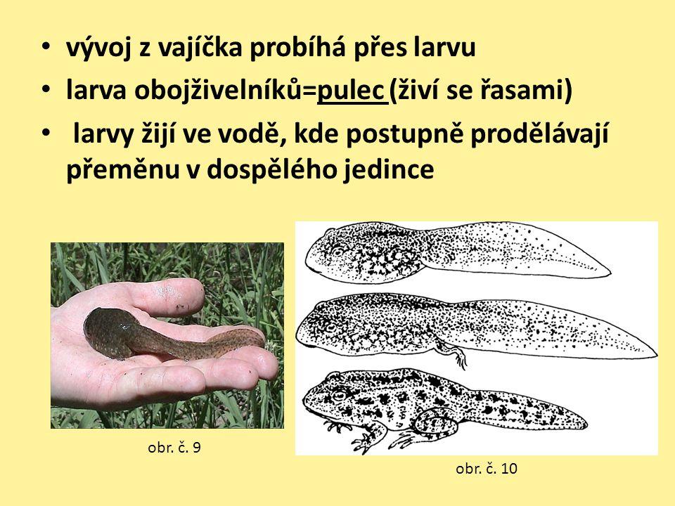 vývoj z vajíčka probíhá přes larvu