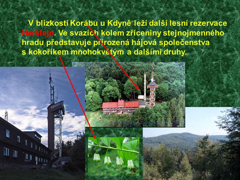 V blízkosti Korábu u Kdyně leží další lesní rezervace