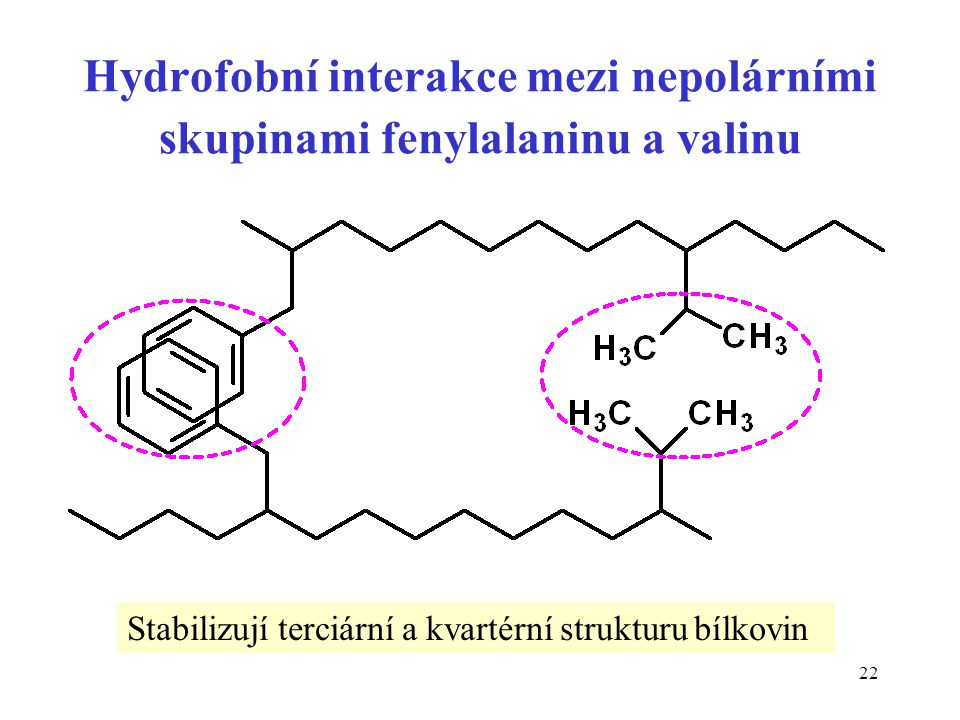 Hydrofobní interakce mezi nepolárními skupinami fenylalaninu a valinu