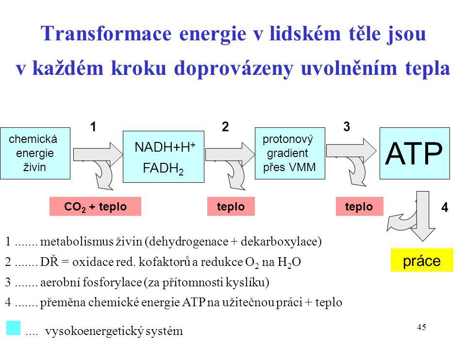 Transformace energie v lidském těle jsou v každém kroku doprovázeny uvolněním tepla