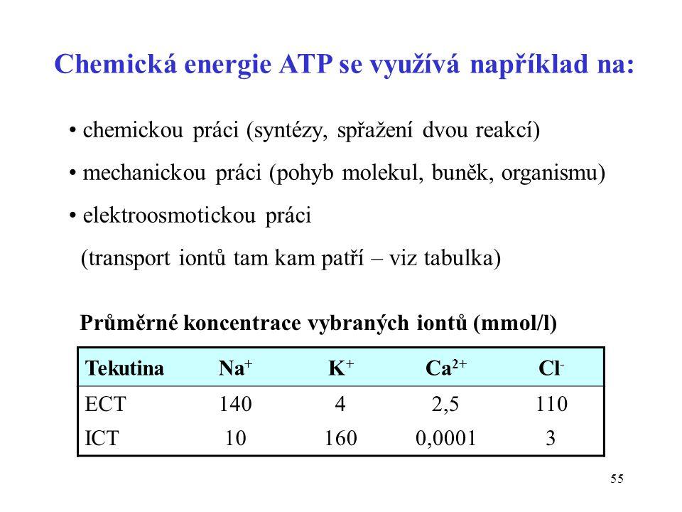 Chemická energie ATP se využívá například na: