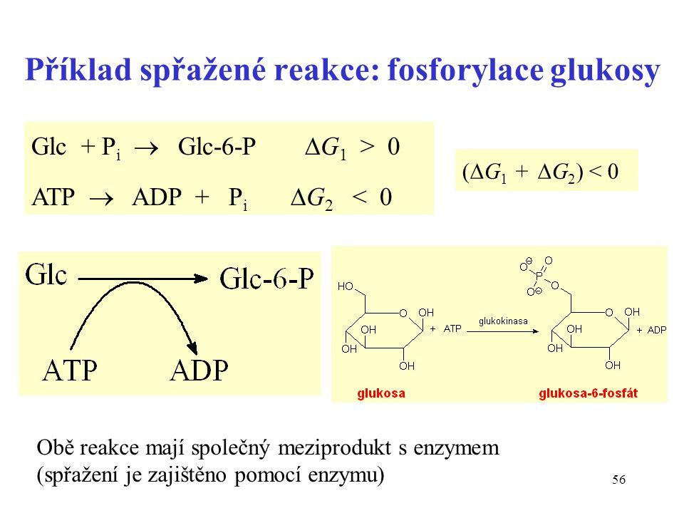 Příklad spřažené reakce: fosforylace glukosy