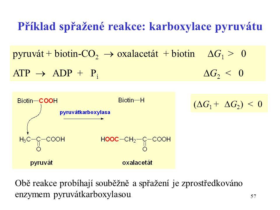 Příklad spřažené reakce: karboxylace pyruvátu