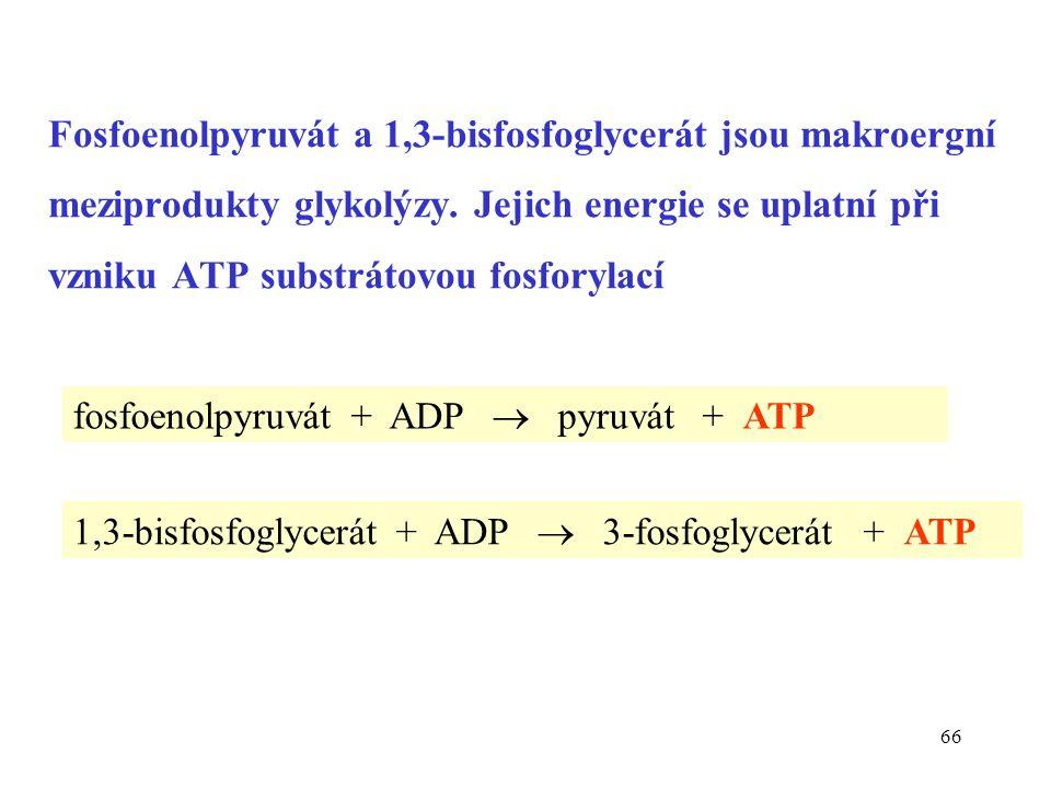 Fosfoenolpyruvát a 1,3-bisfosfoglycerát jsou makroergní meziprodukty glykolýzy. Jejich energie se uplatní při vzniku ATP substrátovou fosforylací