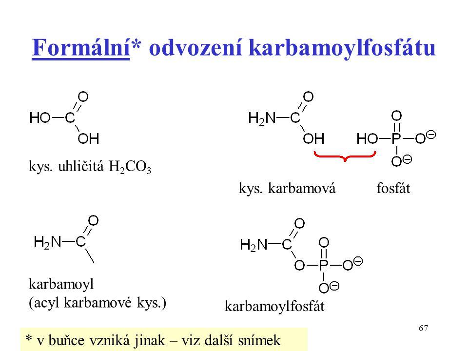 Formální* odvození karbamoylfosfátu
