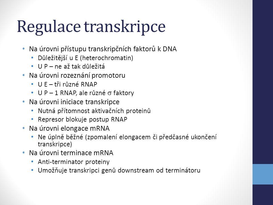 Regulace transkripce Na úrovni přístupu transkripčních faktorů k DNA