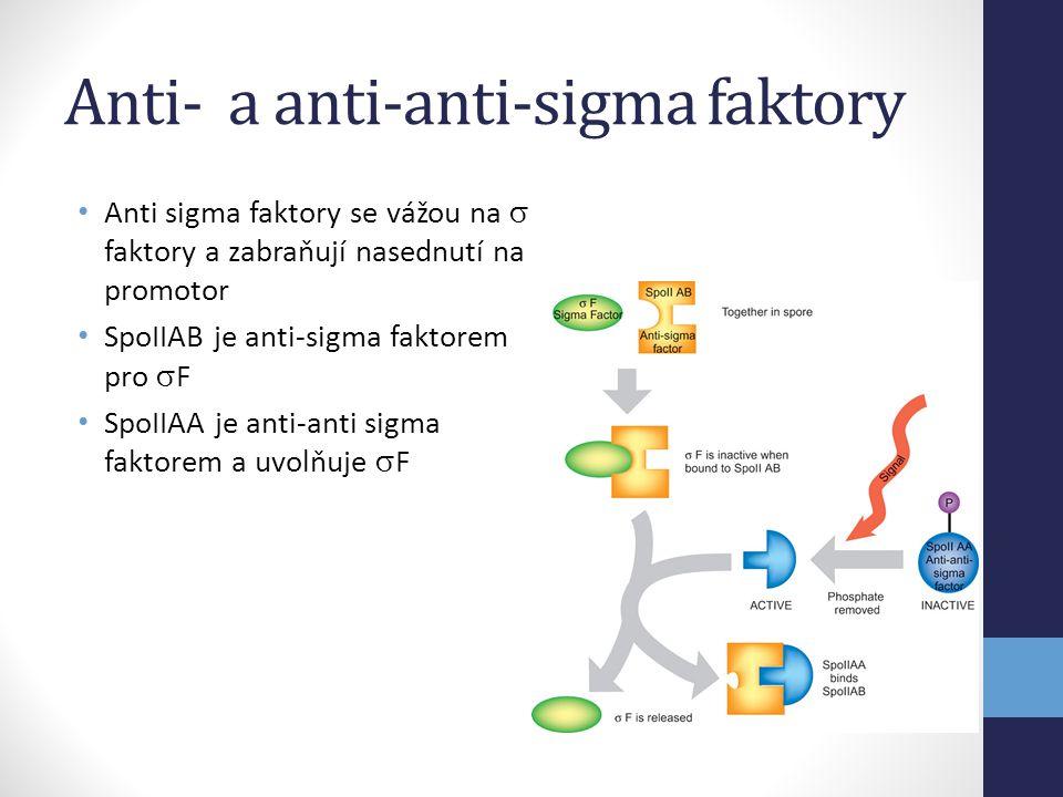 Anti- a anti-anti-sigma faktory