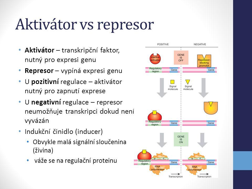 Aktivátor vs represor Aktivátor – transkripční faktor, nutný pro expresi genu. Represor – vypíná expresi genu.