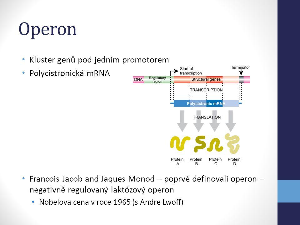 Operon Kluster genů pod jedním promotorem Polycistronická mRNA