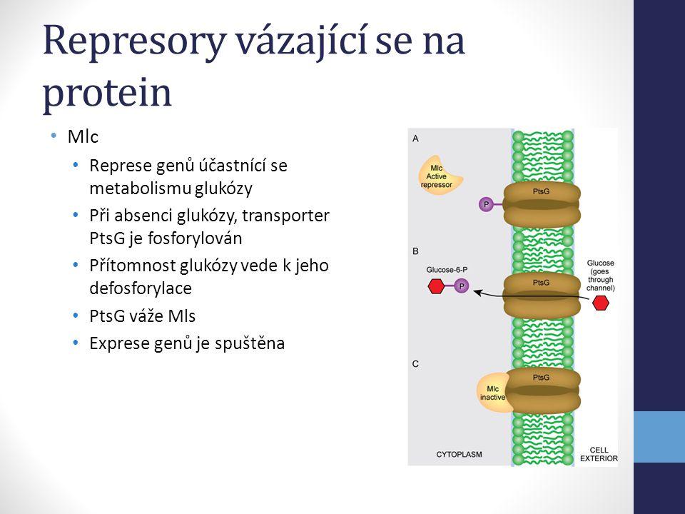 Represory vázající se na protein