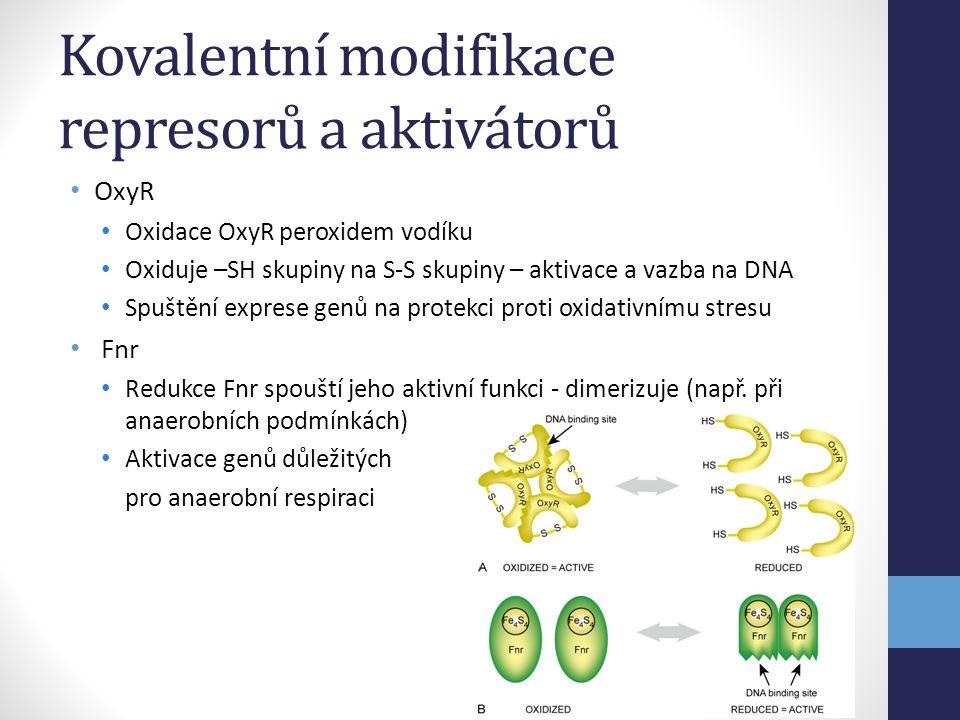 Kovalentní modifikace represorů a aktivátorů