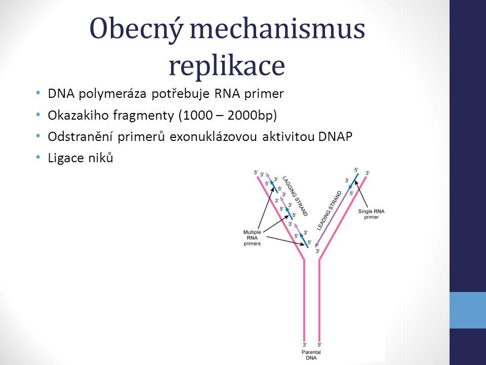 Obecný mechanismus replikace