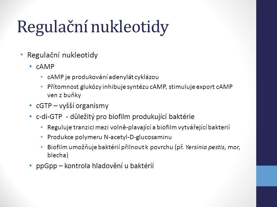 Regulační nukleotidy Regulační nukleotidy cAMP cGTP – vyšší organismy