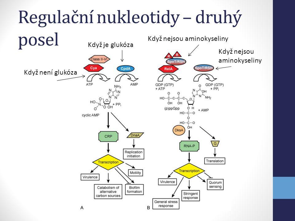 Regulační nukleotidy – druhý posel