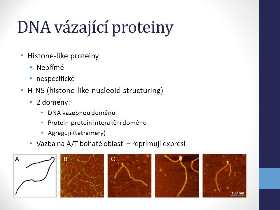 DNA vázající proteiny Histone-like proteiny