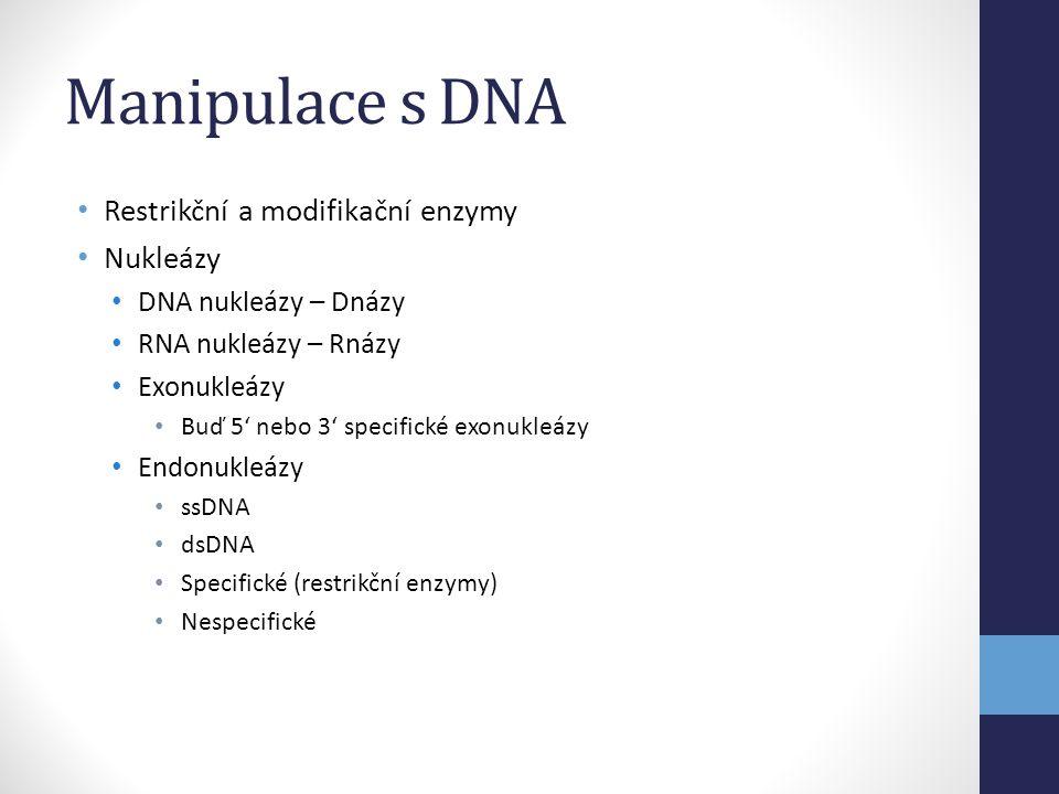Manipulace s DNA Restrikční a modifikační enzymy Nukleázy