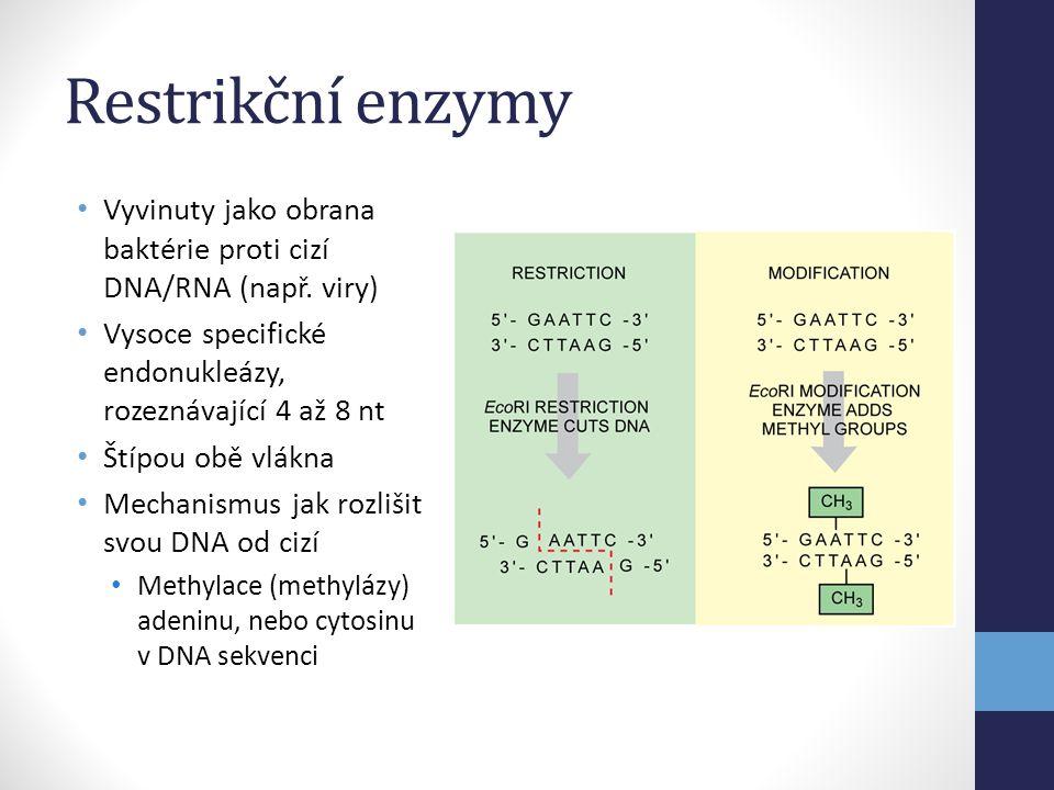 Restrikční enzymy Vyvinuty jako obrana baktérie proti cizí DNA/RNA (např. viry) Vysoce specifické endonukleázy, rozeznávající 4 až 8 nt.