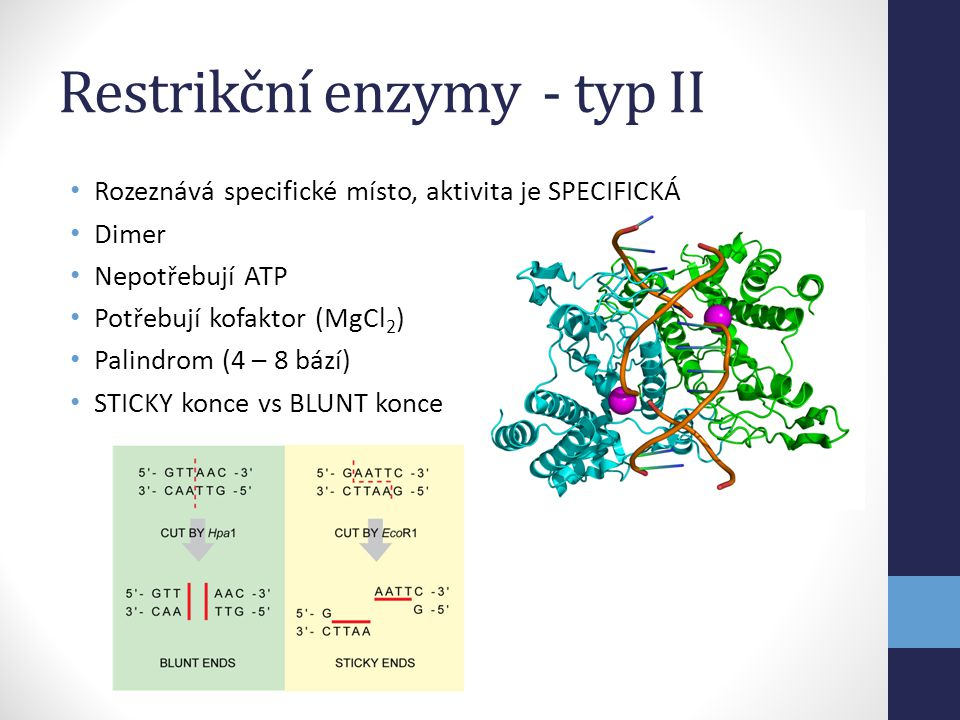 Restrikční enzymy - typ II