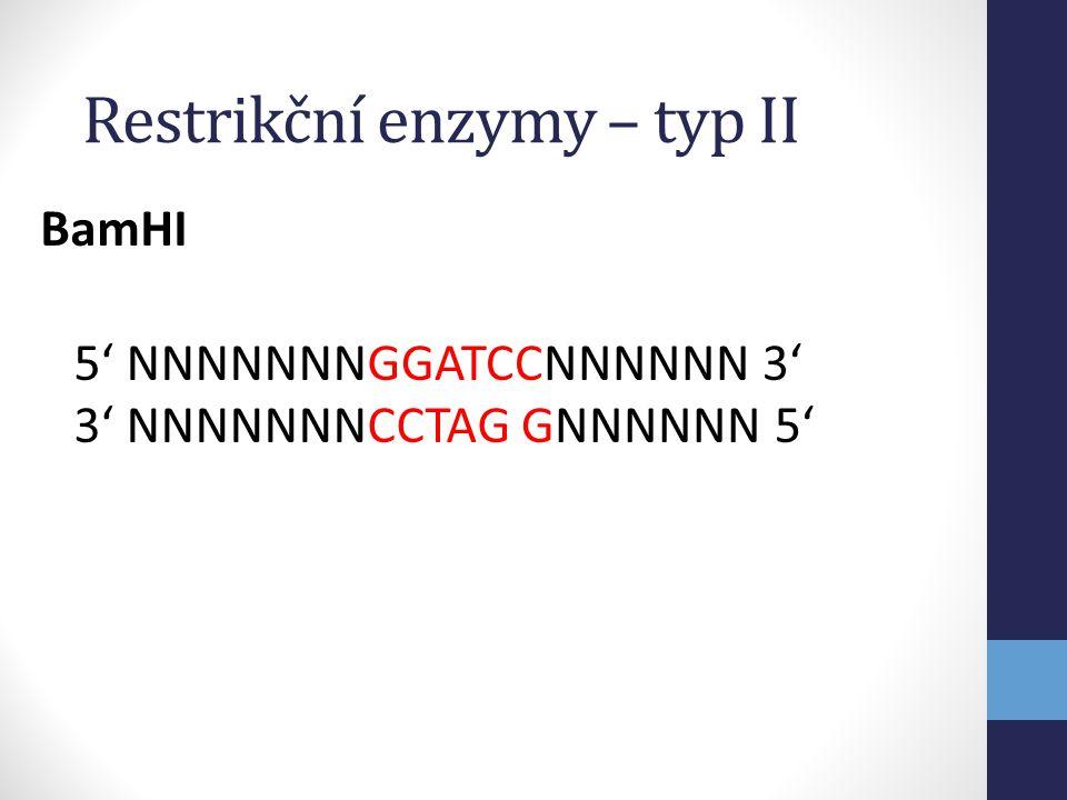 Restrikční enzymy – typ II
