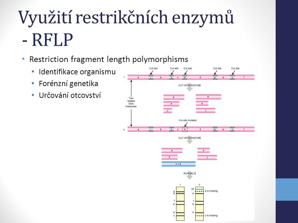 Využití restrikčních enzymů - RFLP