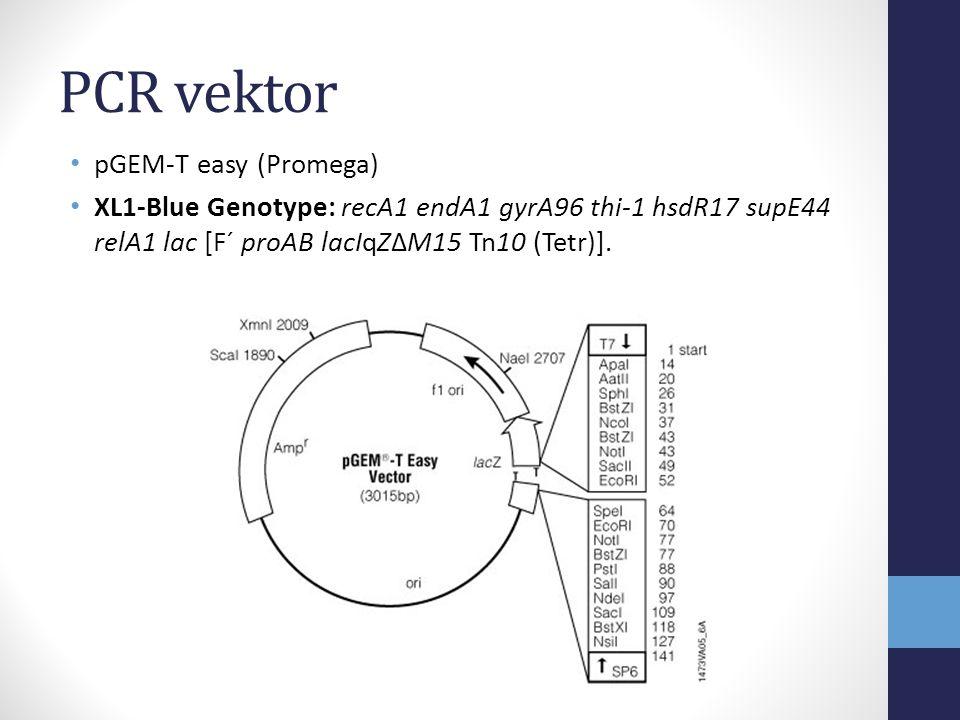 PCR vektor pGEM-T easy (Promega)