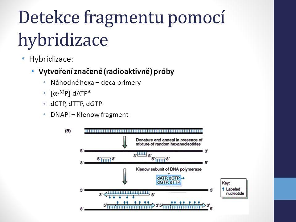 Detekce fragmentu pomocí hybridizace
