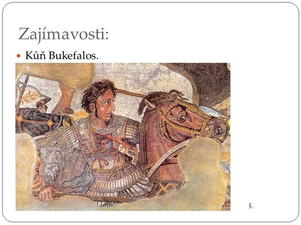 Zajímavosti: Kůň Bukefalos. 5.