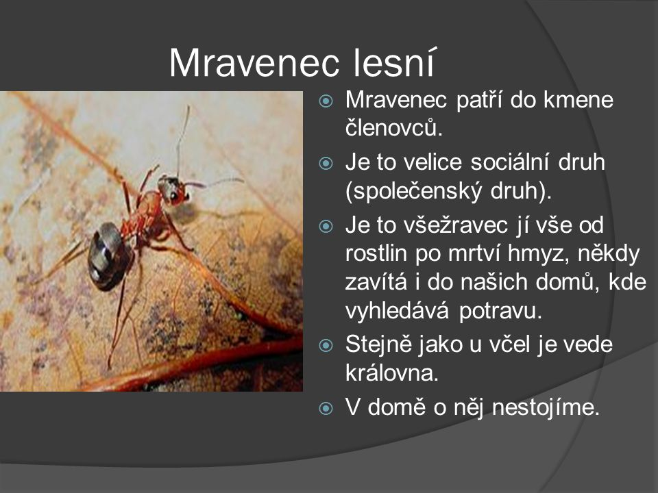 Mravenec lesní Mravenec patří do kmene členovců.