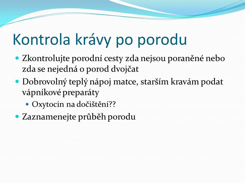 Kontrola krávy po porodu