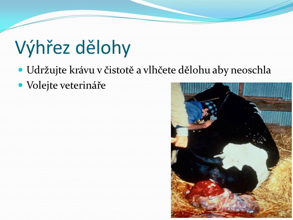 Výhřez dělohy Udržujte krávu v čistotě a vlhčete dělohu aby neoschla