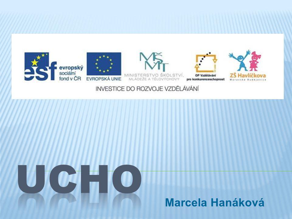 UCHO Marcela Hanáková
