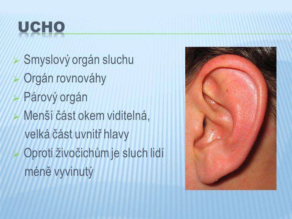 UCHO Smyslový orgán sluchu Orgán rovnováhy Párový orgán