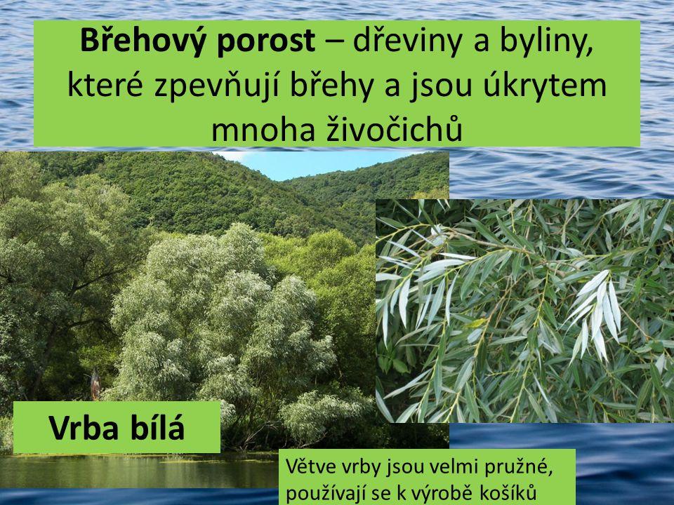 Břehový porost – dřeviny a byliny, které zpevňují břehy a jsou úkrytem mnoha živočichů