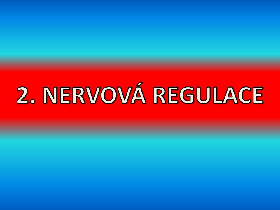 2. NERVOVÁ REGULACE