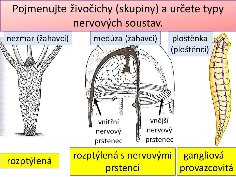 Pojmenujte živočichy (skupiny) a určete typy nervových soustav.