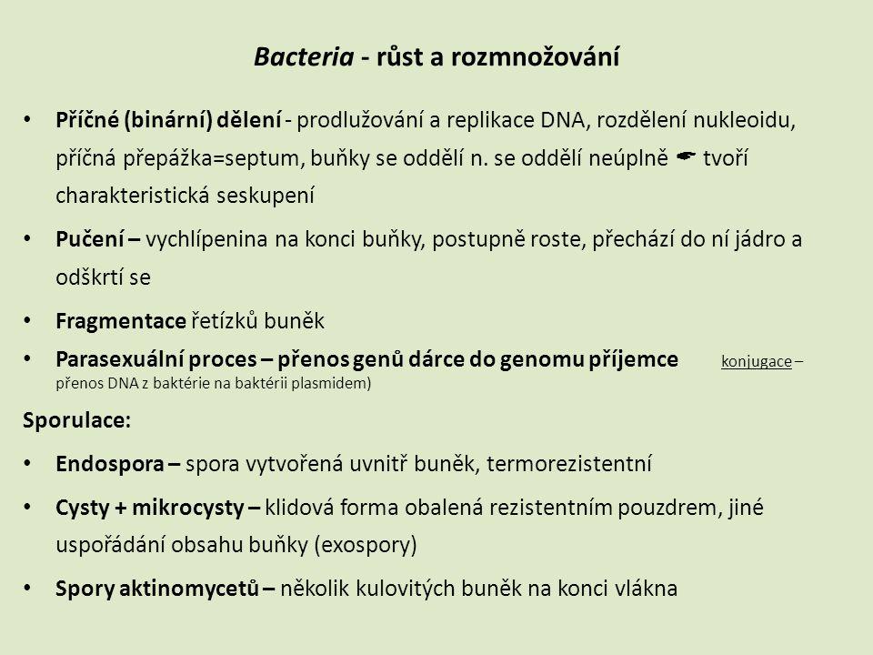 Bacteria - růst a rozmnožování