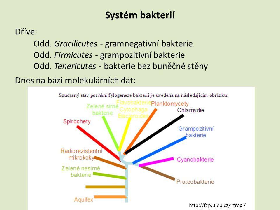 Systém bakterií