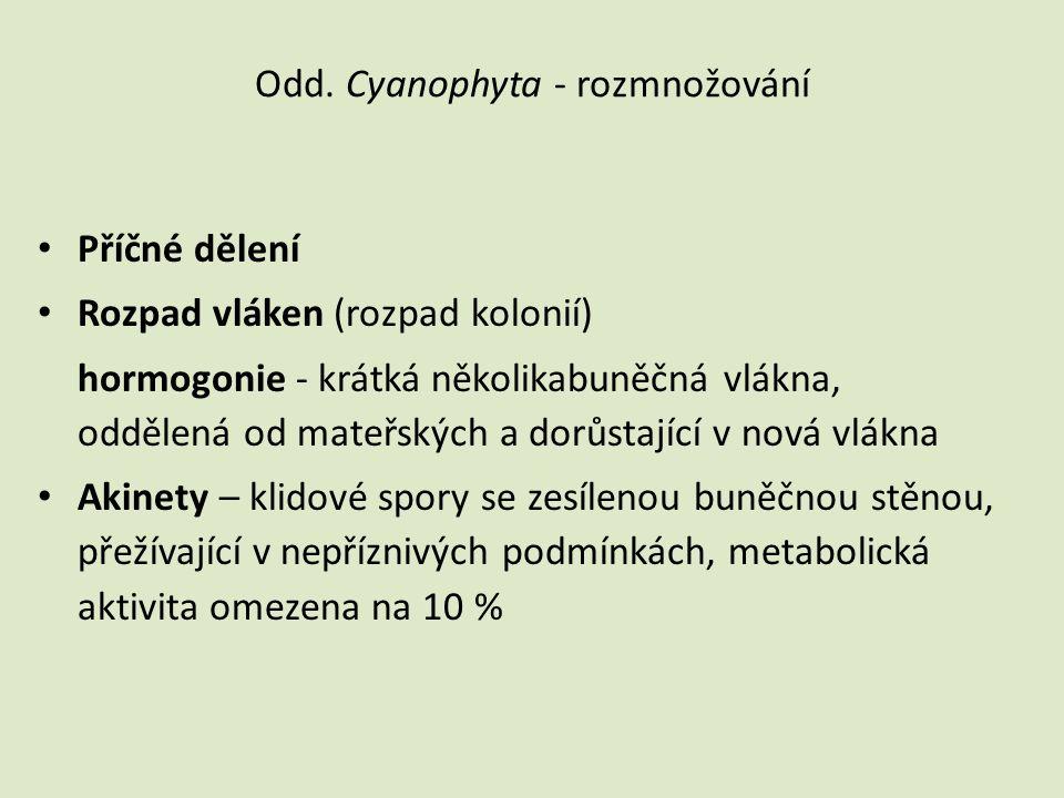 Odd. Cyanophyta - rozmnožování