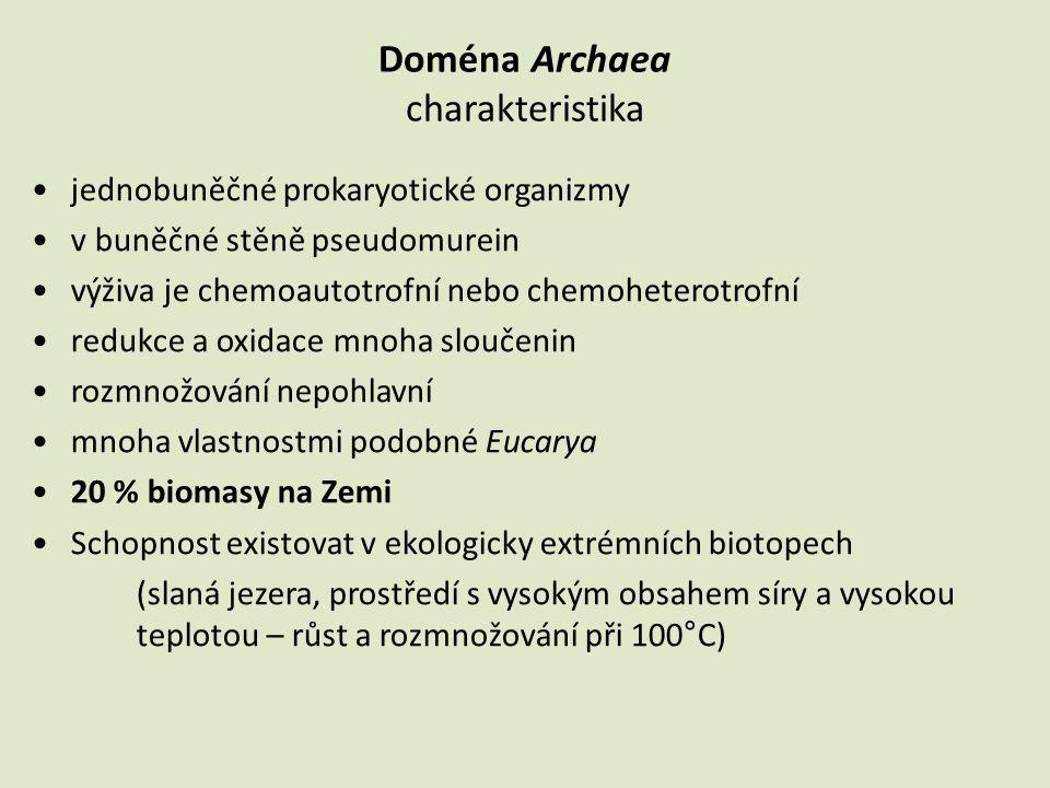 Doména Archaea charakteristika