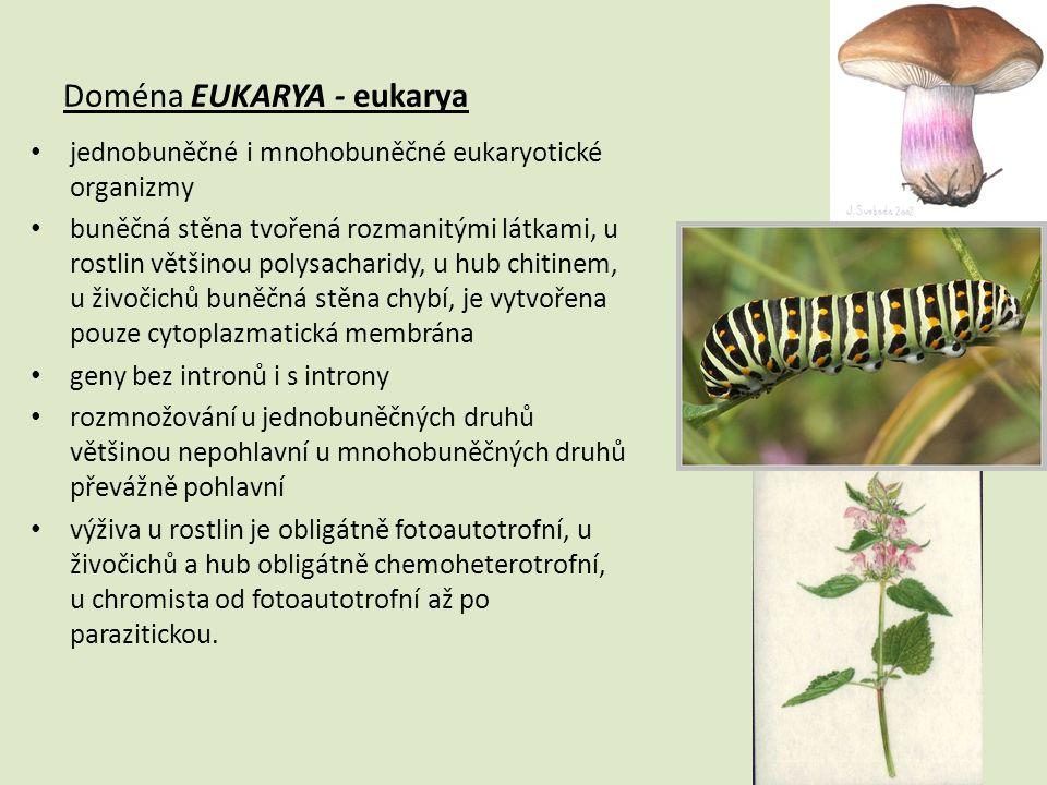 Doména EUKARYA - eukarya