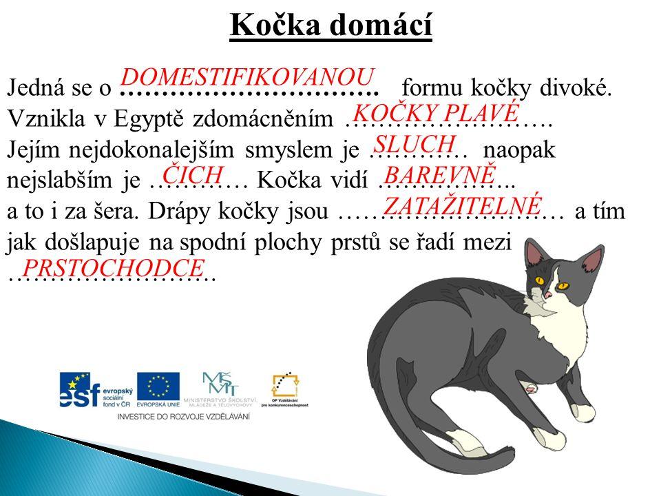 Kočka domácí DOMESTIFIKOVANOU