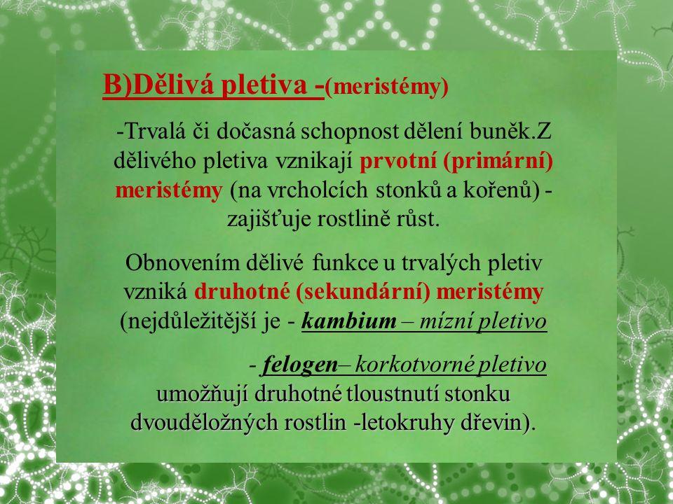 B)Dělivá pletiva -(meristémy)