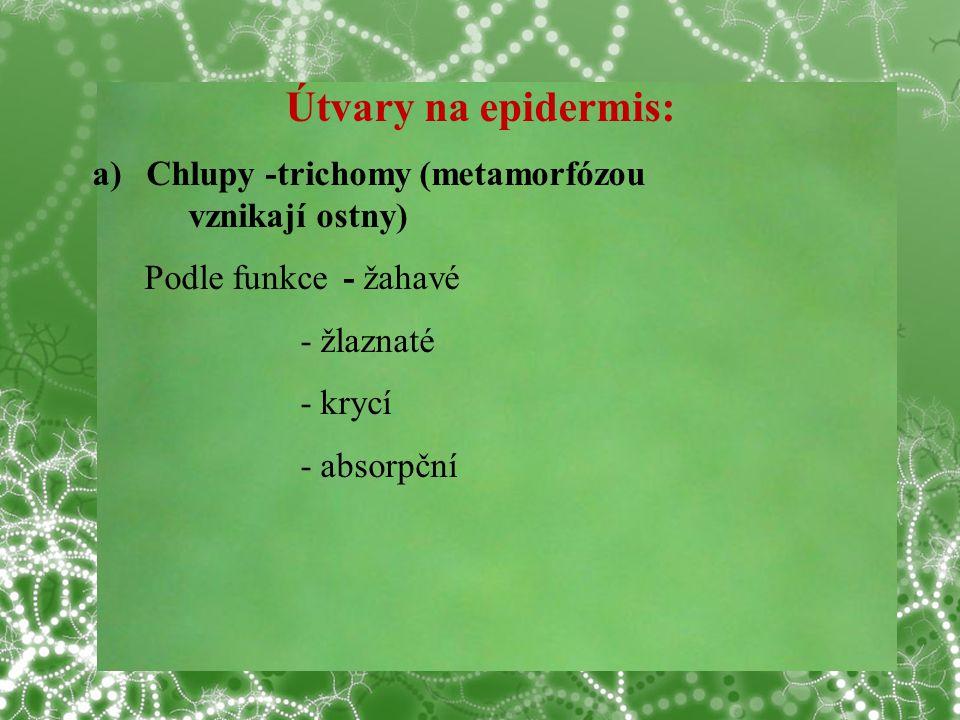 Útvary na epidermis: Chlupy -trichomy (metamorfózou vznikají ostny)