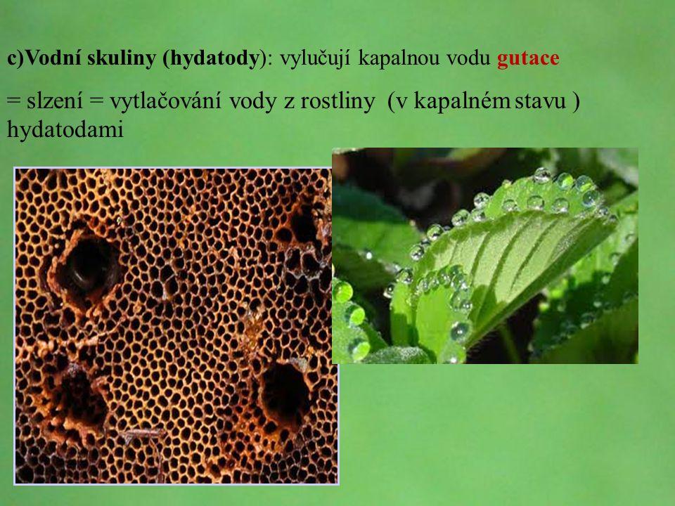 = slzení = vytlačování vody z rostliny (v kapalném stavu ) hydatodami