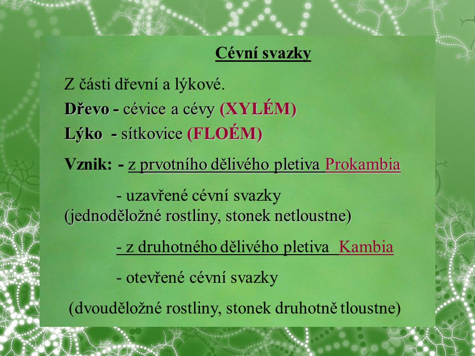 Cévní svazky Z části dřevní a lýkové. Dřevo - cévice a cévy (XYLÉM) Lýko - sítkovice (FLOÉM) Vznik: - z prvotního dělivého pletiva Prokambia.