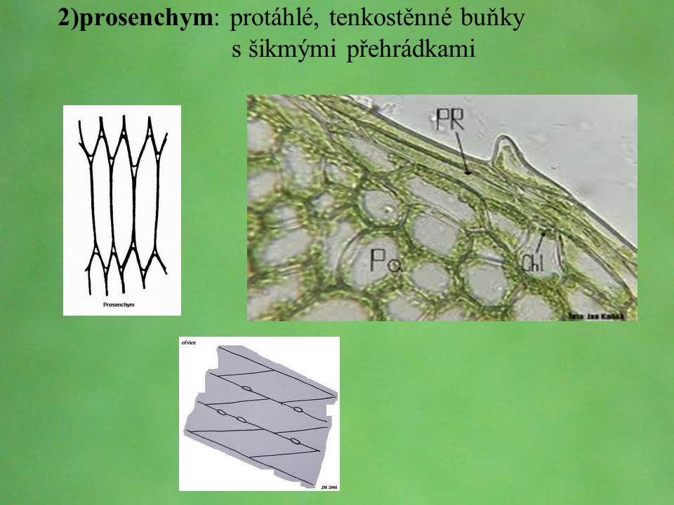 2)prosenchym: protáhlé, tenkostěnné buňky s šikmými přehrádkami